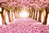 Falling petal over the romantic tunnel of pink flower trees / Romantic Blossom tree over nature background in Spring season / flowers Background - 148140630