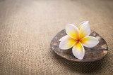 White Plumeria flower on coconut shell on hessian texture background, vintage tone style