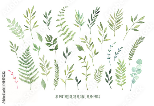 Fototapeta Hand drawn watercolor illustrations. Botanical clipart ( leaves, flowers, swirls, herbs, branches). Floral Design elements. Perfect for wedding invitations, greeting cards, blogs, posters and more
