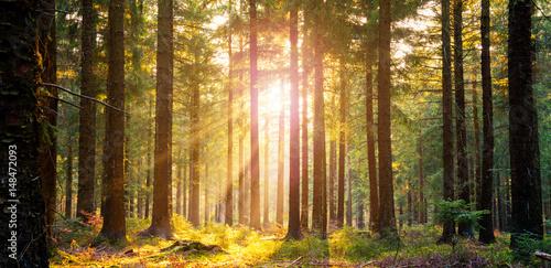 silent-forest-na-wiosne-z-pieknym-jasnym-sloncu