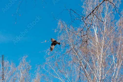 Poster hawk in the sky. a bird in flight.