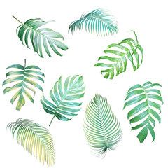 Collection of Palm leaves and Monstera philodendron in light green-yellow color tone, tropical leaves isolated on white background.