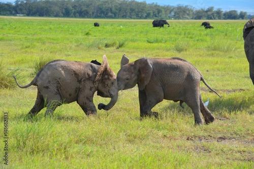 Kenia Safari Poster