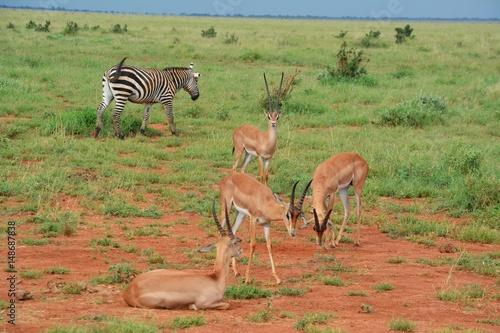 Poster Kenia Safari