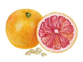 Watercolor illustration of a grapefruit with red flesh and seeds © Irina Violet