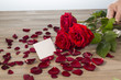 Rosen für Valentinstag und Muttertag - 148744247