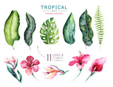 Hand drawn watercolor tropical plants set . Exotic palm leaves, jungle tree, brazil tropic botany elements and flowers. Perfect for fabric design. Aloha set - 148811862