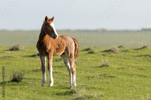 Horses in pasture on nature Poster