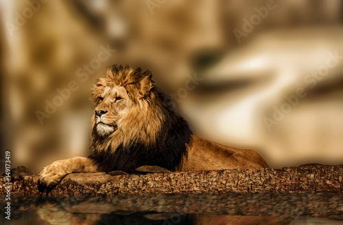 Fotobehang Lion