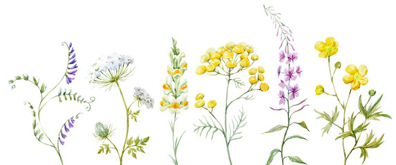 Watercolor wild flowers © zenina