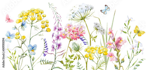 Poster Watercolor wild flowers