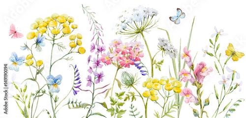 akwarela-dzikich-kwiatow