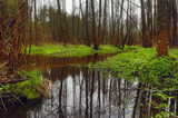 Picturesque spring forest and river.
