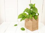 Hydrangea seedlings in paper bag on. Preparing for garden work