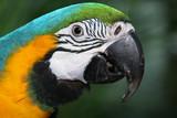 Beautiful parrot closeup