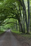 Weg im Wald und Baumbogen
