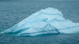 Penguins climbing up iceberg floating in Paradise bay in Antarctica are dwarfed by its size. - 149438050