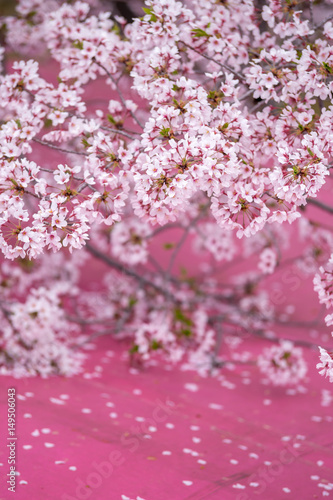 Poster Roze 桜の花