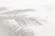 ombre de palmes sur plage de sable blanc