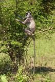 A monkey on a tree