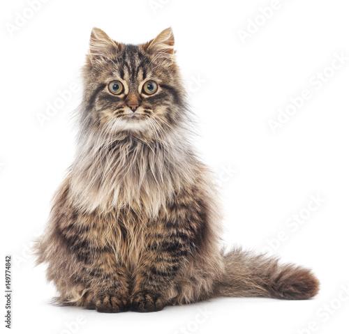 Brown cat. Poster