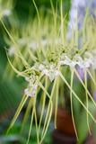 Orchideen Rio Botanischer Garten