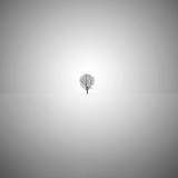 Minimalist fine art black and white photo with a lone tree in the snow. - 149850259