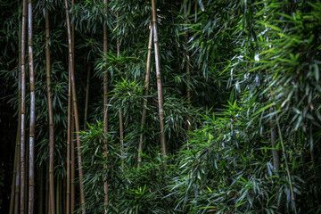 Green Bamboo forest pattern