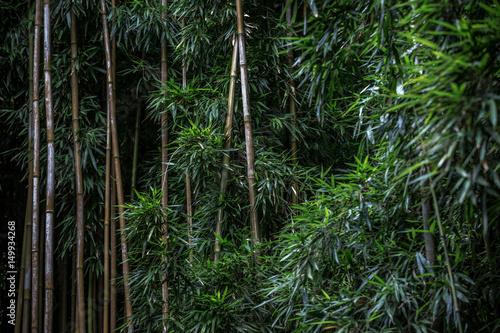 Fotobehang Bamboe Green Bamboo forest pattern