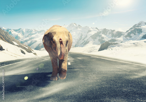 Massive elephant as symbol for transportation concept Poster