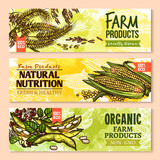 Vector banners of farm grown grain and cereals - 149948264