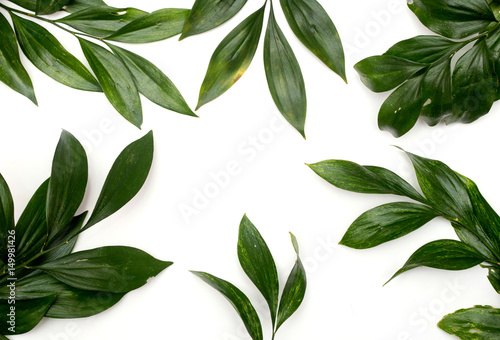 green leaves on white background © urika