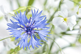 Blumen mit Dekoration