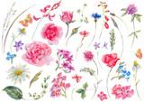 Watercolor set of vintage floral summer natural elements. - 150023473