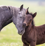 Horse and foal love and care - 150085294