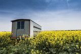 Trailer with a bee in the field of rapeseed