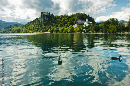 Poster Oceanië Swan on a lake Bled with castle on a hill in a background, slovenian Alps, Slovenia