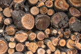 wooden logs. firewoods folded together.