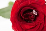 Red rose with a diamond ring - 150157452