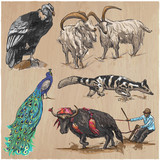 An hand drawn vector collection, pack of animals. Colored line art. - 150202441