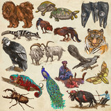 An hand drawn full sized collection, colored pack of animals. On old paper. - 150203850