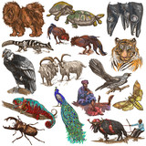 An hand drawn full sized colored collection, pack of animals. Isolated on white. - 150204205