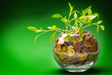 Plants growing In savings coins - Investment