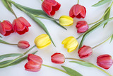 tulips pattern/red and yellow tulips on white background - 150250837