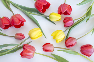 tulips pattern/red and yellow tulips on white background