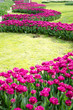 Tulip and spring flowers during the tulip festival