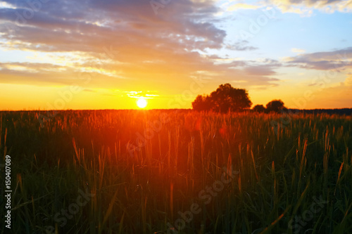 Grass in the field in the evening
