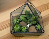 Miniature succulent plants - 150502684