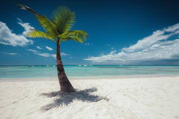 Palmtree and tropical beach
