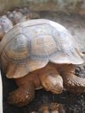Orange turtle laying on the rock floor
